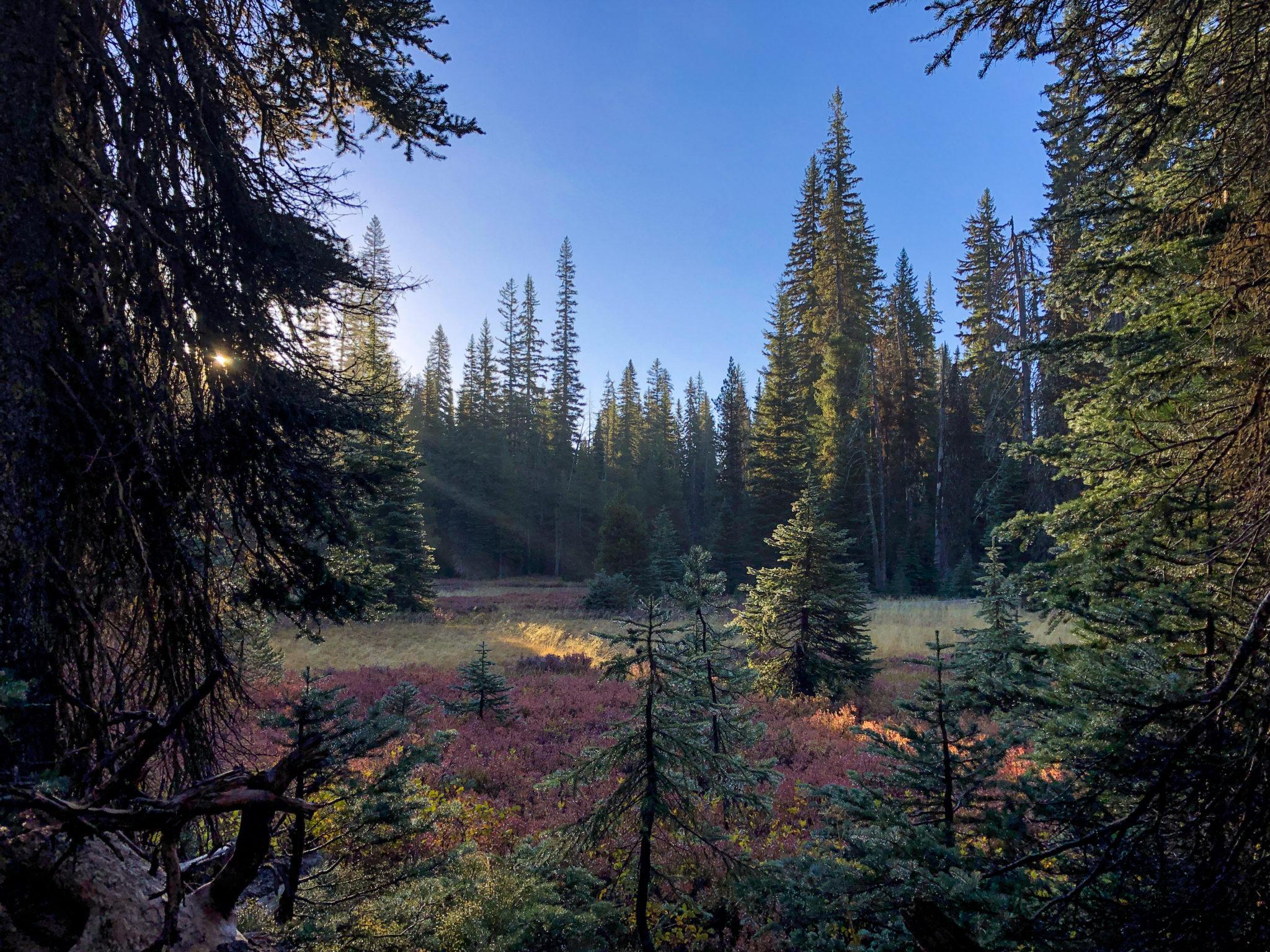 meadow four mile lake loop