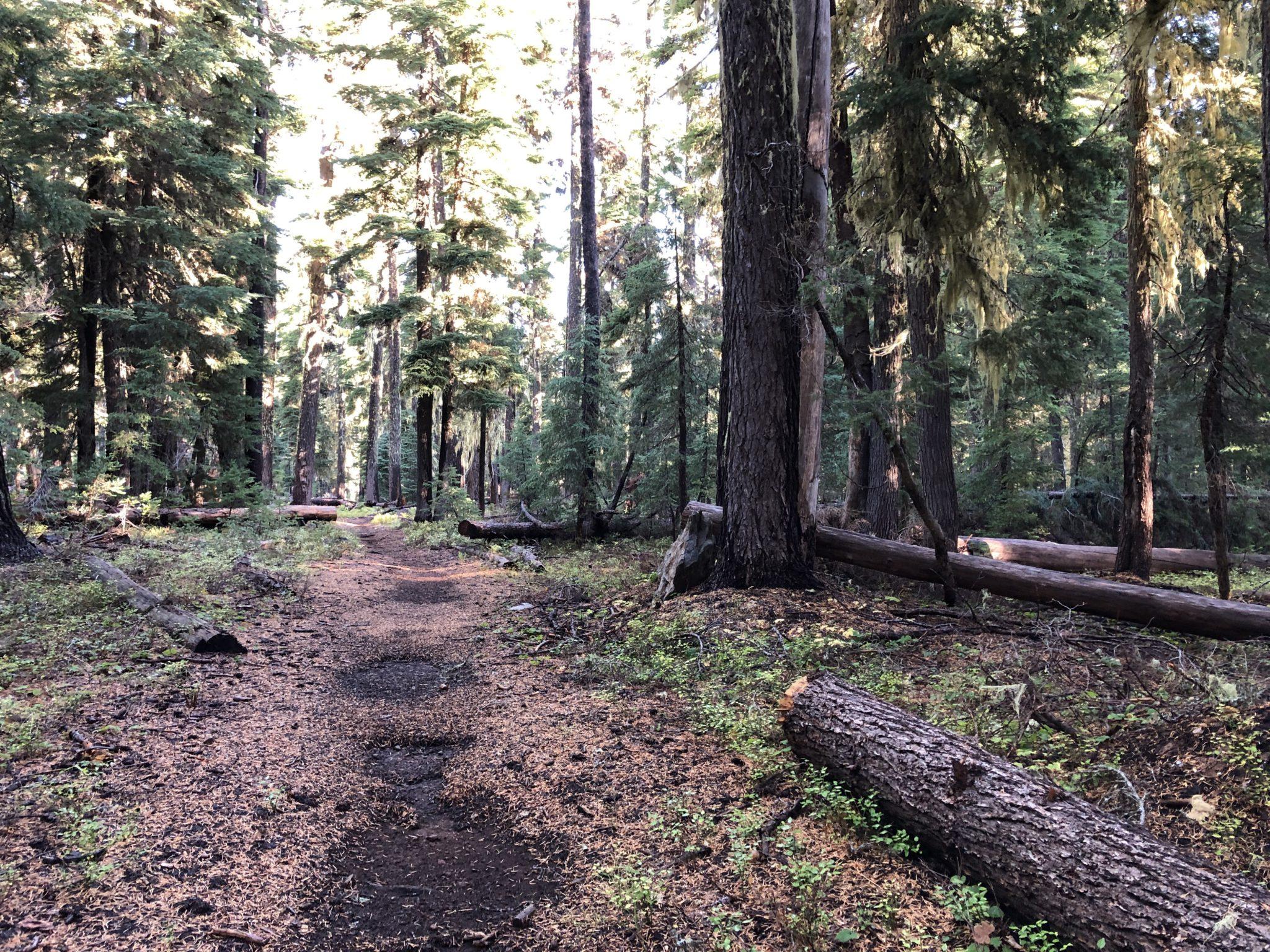 Badger Lake Trail Oregon