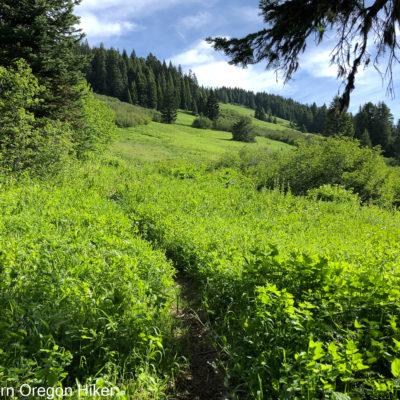 Sturgis Fork Trail