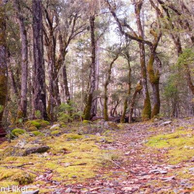 Grouse Loop Trail